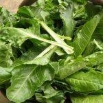 Dieta da taglio Ortofloricoltura & Agriturismo Le Moie