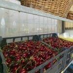 Ciliegie Ortofloricoltura & Agriturismo Le Moie