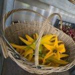 Fiori di Zucca Ortofloricoltura & Agriturismo Le Moie