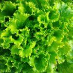 Insalata Gentile Ortofloricoltura & Agriturismo Le Moie