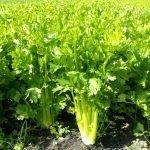Sedano Ortofloricoltura & Agriturismo Le Moie