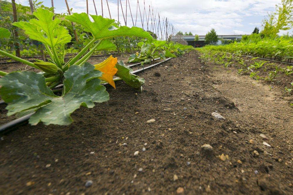 Le Moie Ortofloricoltura & Agriturismo