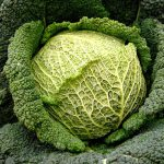 Cavolo Ortofloricoltura & Agriturismo Le Moie