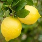 Limoni Ortofloricoltura & Agriturismo Le Moie
