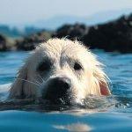 Spiagge cani Lago di Garda