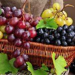 Uva Ortofloricoltura & Agriturismo Le Moie